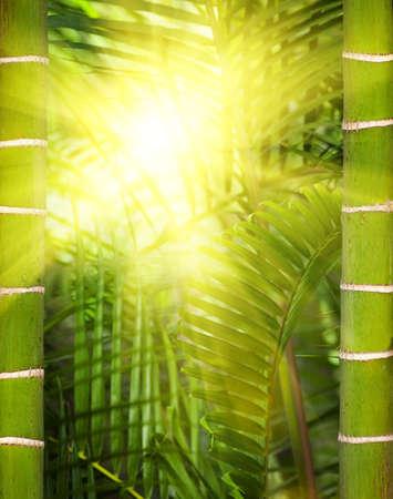 Green plant close-up photo