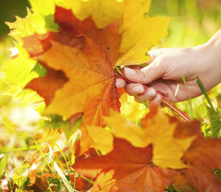 Autumn leaves in human hand photo