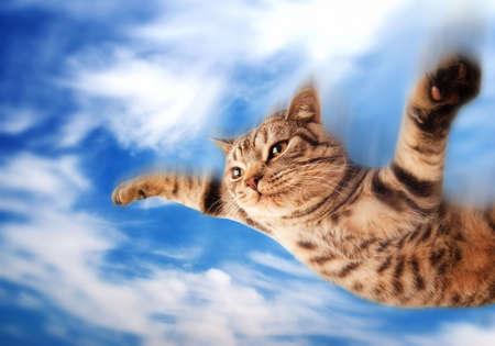 비행 재미 있은 새끼 고양이 스톡 콘텐츠