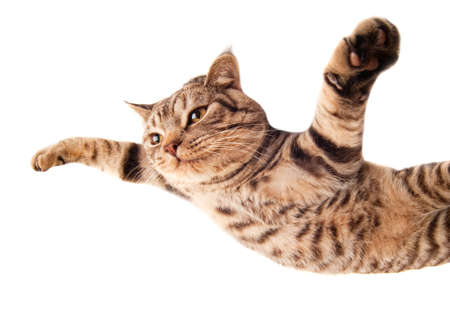 Flying funny kitten photo