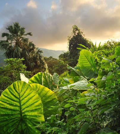 clima tropical: Foto de un fondo tropical