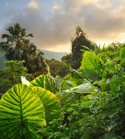 Picture of a tropical background  photo