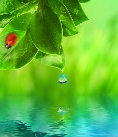 Ladybug sitting on green grass reflected in rendered water