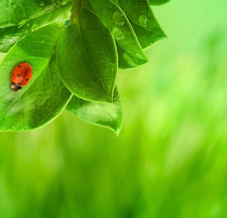 Ladybug sitting on a green leaf. Stock Photo - 6851387