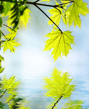 serene: Green leaves reflected in rendered water