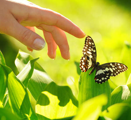 butterfly garden: Human hand and beautiful butterfly Stock Photo