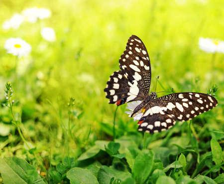 Beau papillon sur une fleur.  Banque d'images - 7028754