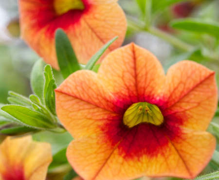Beautiful orange flowers Stock Photo - 7287199