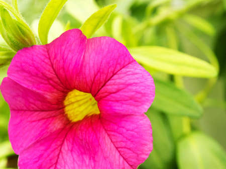 Beautiful pink flower Stock Photo - 7287201