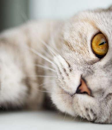 Close-up of a beautiful cat Stock Photo - 7322510