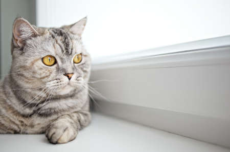 Close-up of a beautiful cat photo