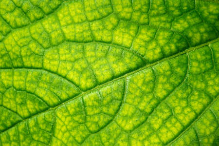 Green leaf texture Stock Photo - 8201744