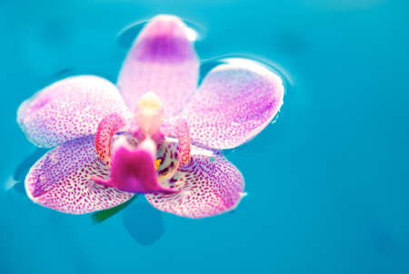 Beautiful orchid flower and clean blue water photo