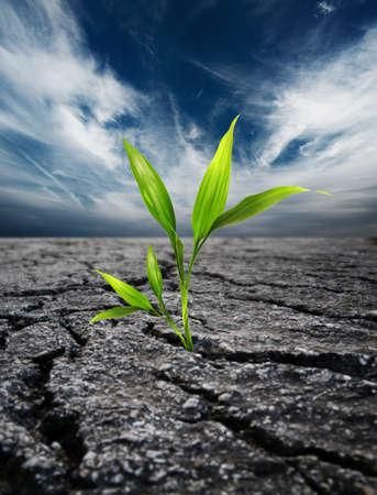 change concept: Green plant growing trough dead soil Stock Photo