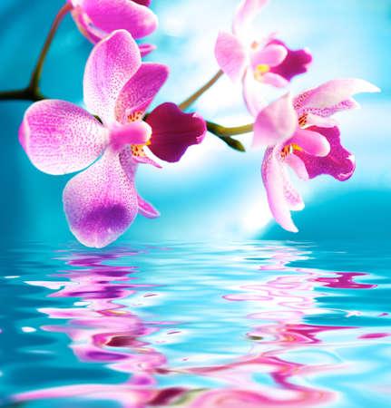 Bellas flores orquídeas se reflejan en el agua
