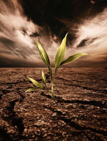 Green plant growing through dead soil photo
