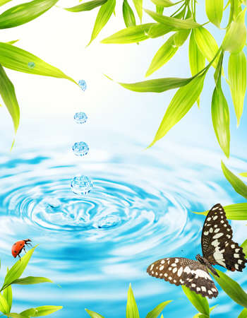 Water drops folling from a bamboo leaf Stock Photo - 9025637