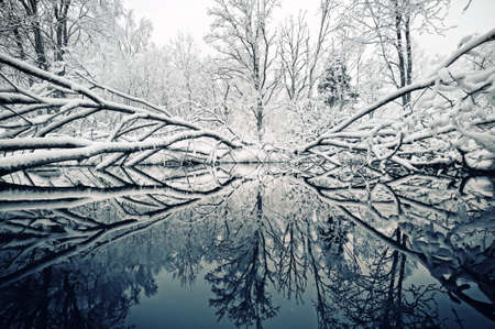 winter day: Beautiful winter day Stock Photo