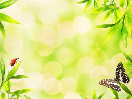 tropical border: Ladybugs sitting on bamboo leaves