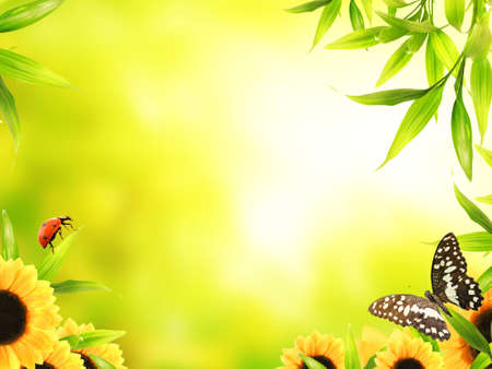sunshine insect: Spring concept Stock Photo