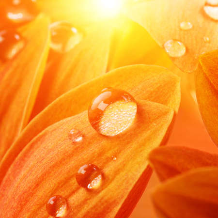 Orange flower petals with water drops on it photo