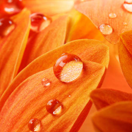Orange flower petals with water drops on it Stock Photo - 9102303