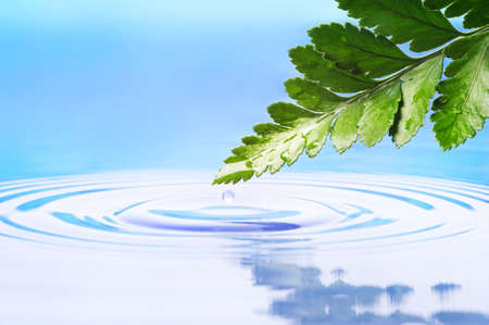 Fresh green leaf reflected in rendered water photo