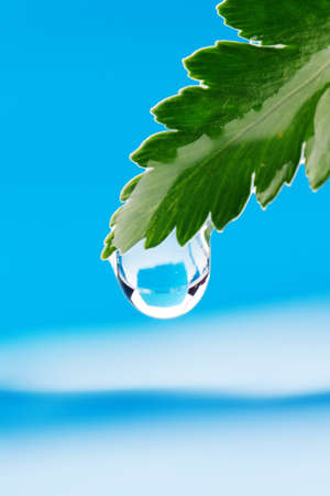 Water drop on fresh green leaf photo