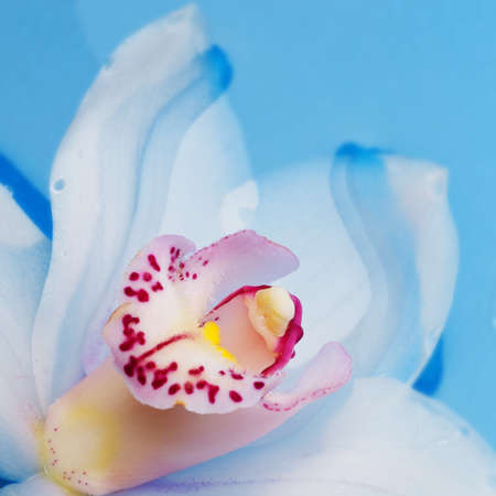 Close-up of an orchid flower in rendered water photo