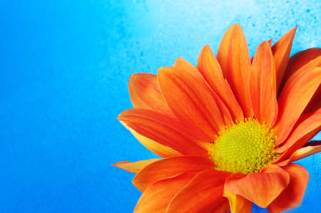 Beautiful orange flower in the water Stock Photo - 9102351