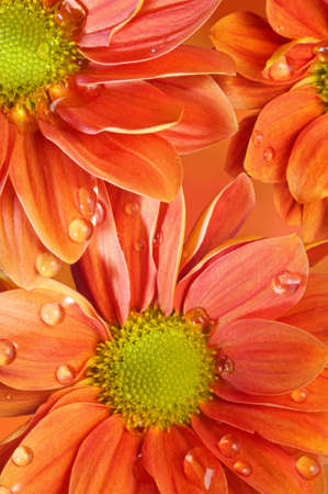Close-up of an orange flowers Stock Photo - 9102411