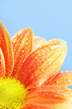 Close-up of an orange flower Stock Photo - 9102373
