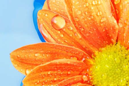 Close-up of an orange flower Stock Photo - 9102350