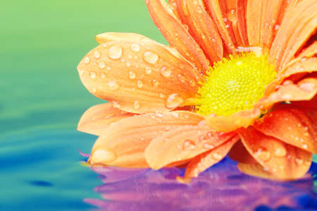 Close-up of an orange flower reflected in rendered water photo