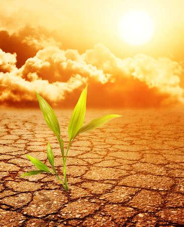 갈라진 금: 녹색 식물 성장 물마루 죽은 토양