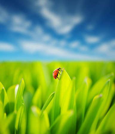 Fresh green grass over cloudy sky Stock Photo - 9573025