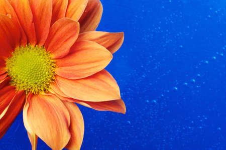 Beautiful orange flower in the water Stock Photo - 9688129