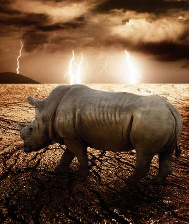 Rhino in a desert storm photo