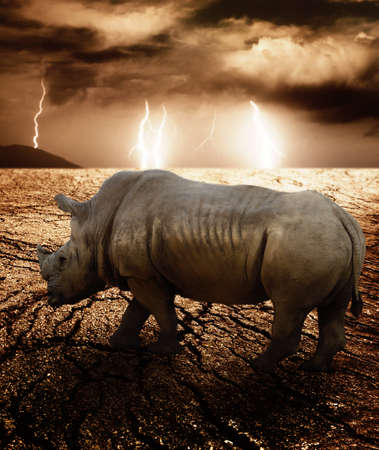 south africa soil: Rhino in a desert storm