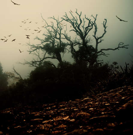horror background: Old spooky tree with birds over it