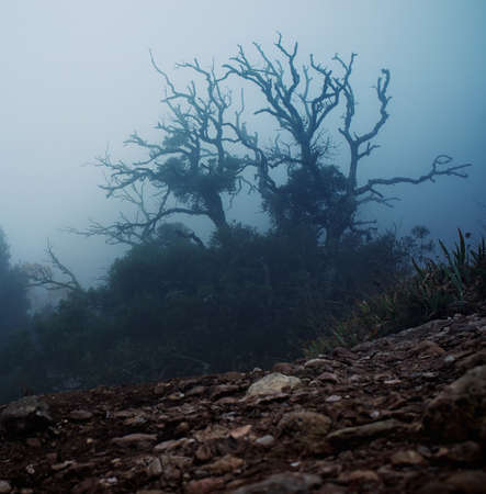 large rocks: Old spooky tree  in the morning