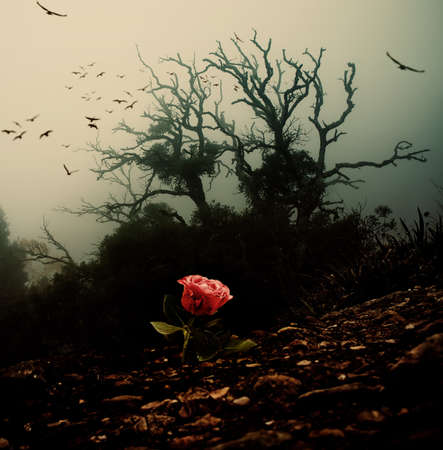 dark forest: Red rose growing through soil against spooky tree Stock Photo