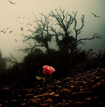 Rode roos groeit door de bodem tegen griezelige boom Stockfoto