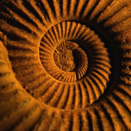 fossil: Antique snail shell close-up. Stock Photo