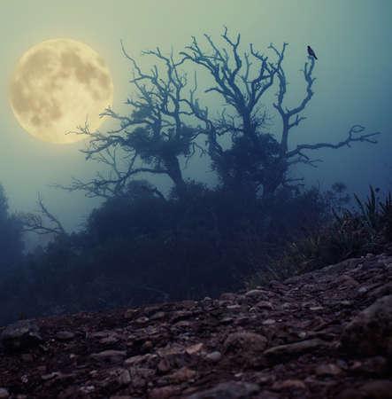 Old spooky tree   photo