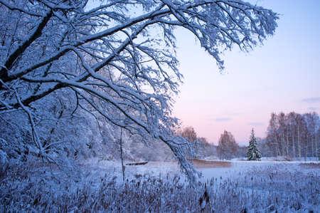Beautiful winter landscape. Stock Photo - 12079961