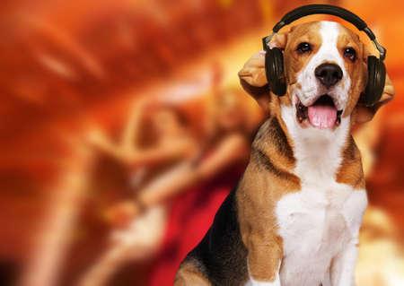 Beagle dog wearing headphones over disco background.