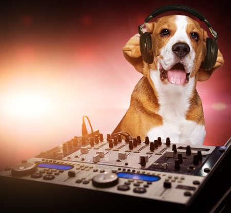 Beagle dog wearing headphones behind DJ mixer.