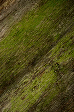dampness: Molded wooden background. Stock Photo