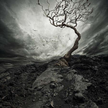 жуткий: Драматическое небо над старым одиноким деревом